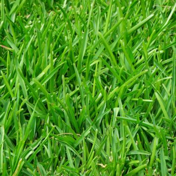 Top Tips for Maintaining a Lawn as Revealed by TruGreen Lawn Care