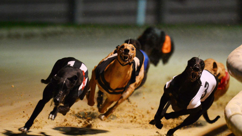 Racing & Sports: A Sporty Guide to Understanding Greyhound Racing & Its Popularity